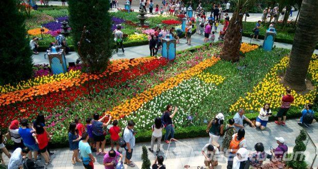 Menikmati Keindahan Tulip Dan Sakura Di Marina Garden By The Bay Singapura
