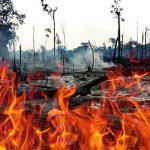 Ilustrasi kebakaran lahan